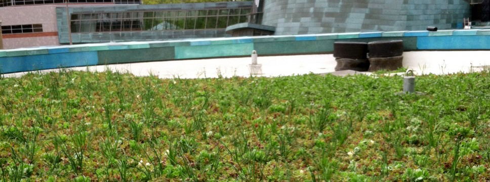 Pappajohn Biomedical Discovery Building Green Roof