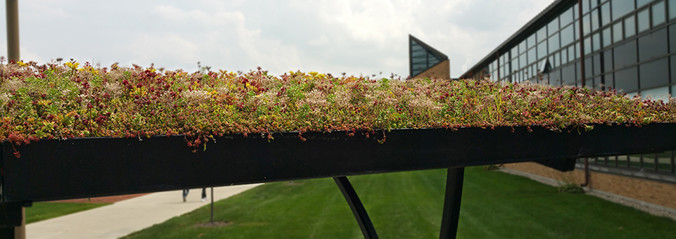 Bowling Green - LiveRoof green roof over bike shelter-Banner