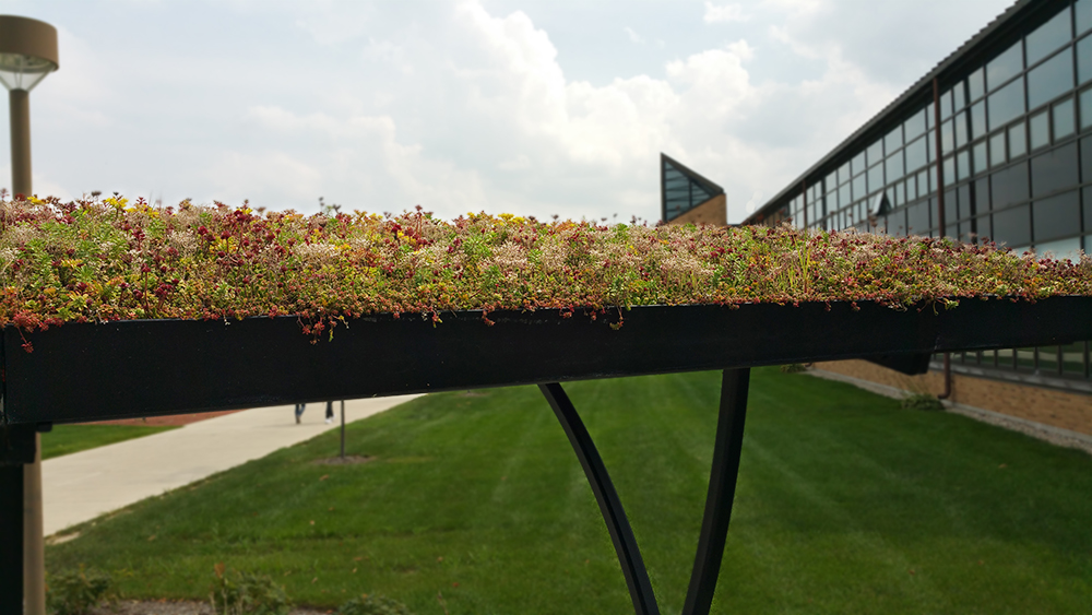 Bowling Green - LiveRoof green roof over bike shelter