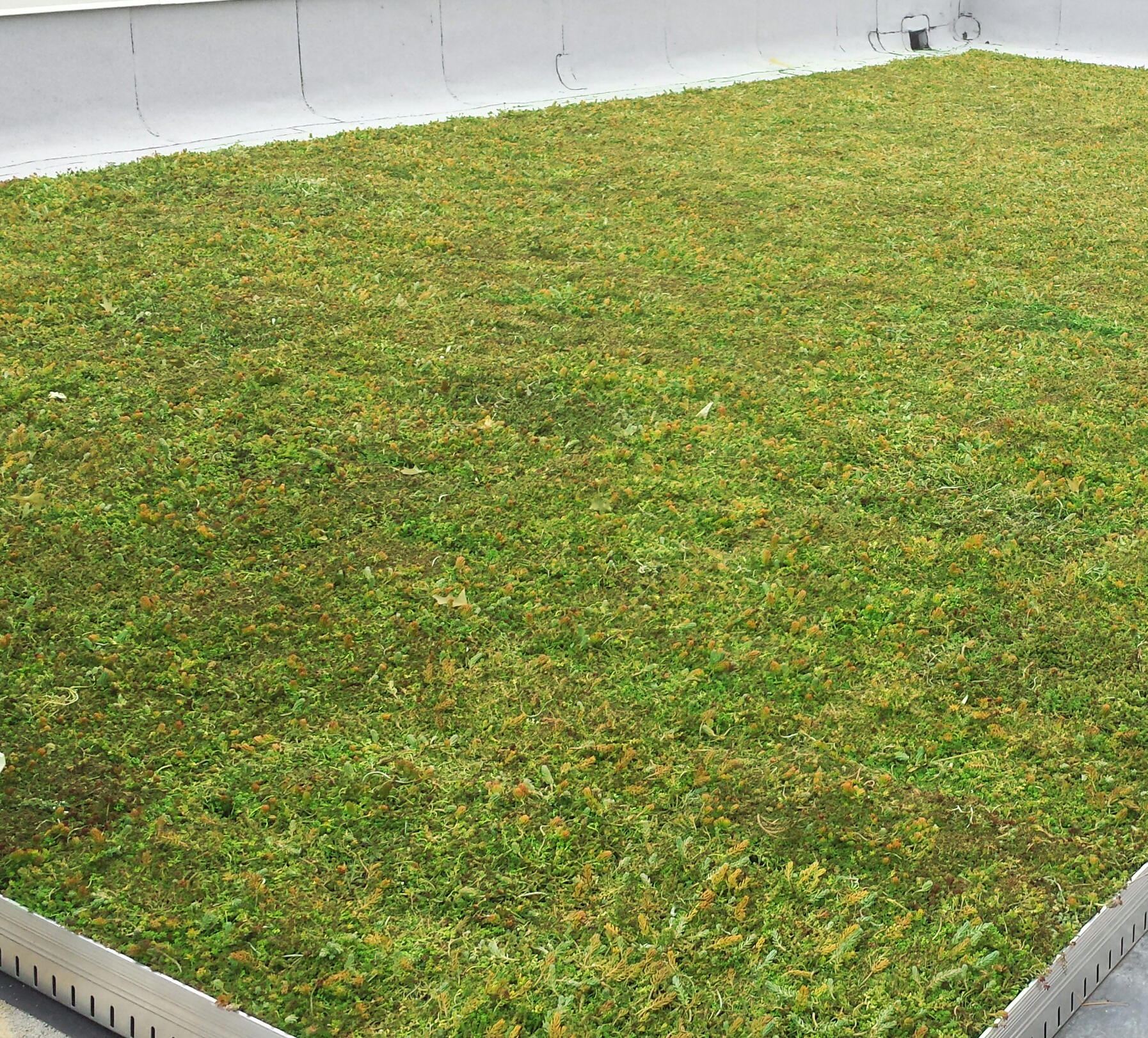 Moorestown Municipal Building Green Roof