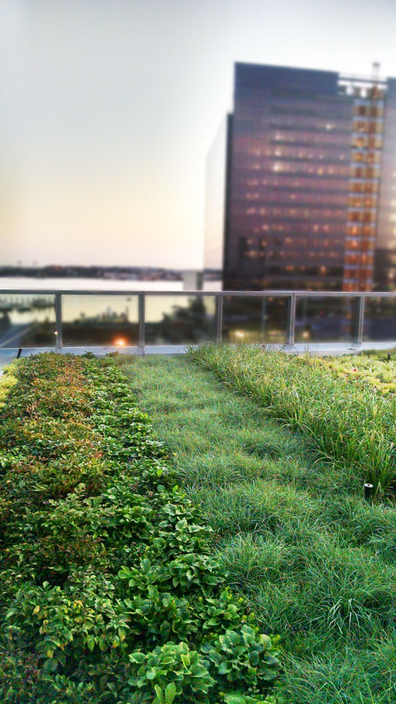 101-Seaport-Vegetated-Roof