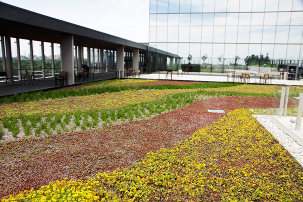 Bridgepoint-Health-Living-Roof-by-LiveRoof