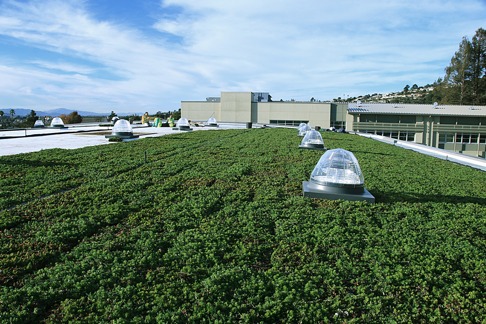 Korematsu Vegetated Roof