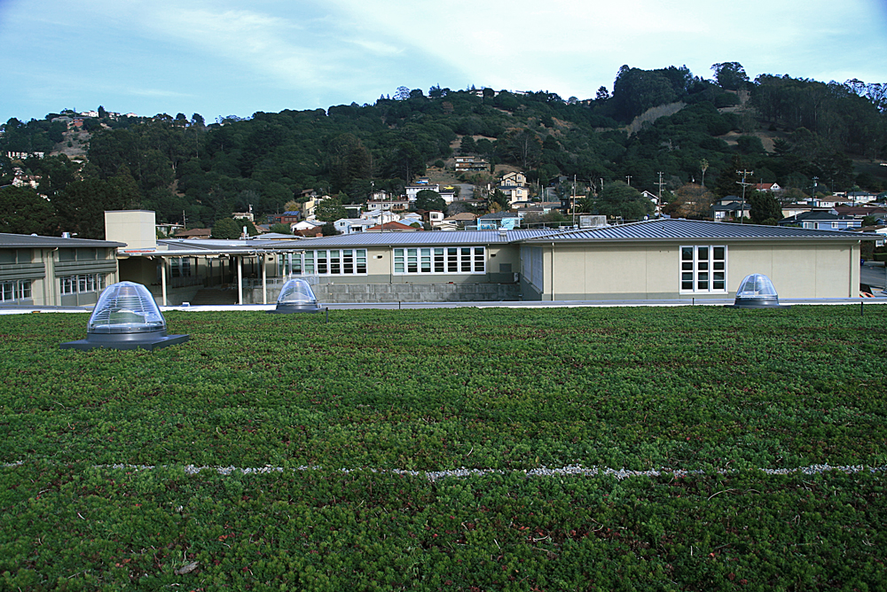 Portola-Valley---Korematsu-Middle-School-gym-Living-roof