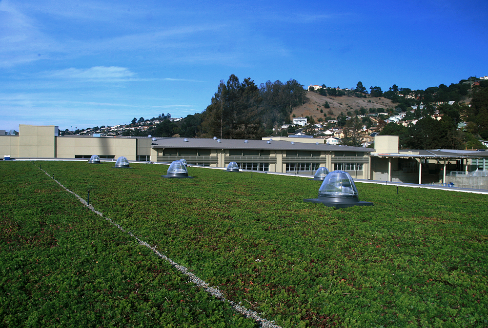 Korematsu Middle School Green Roof