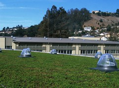 Korematsu Middle School Living Roof