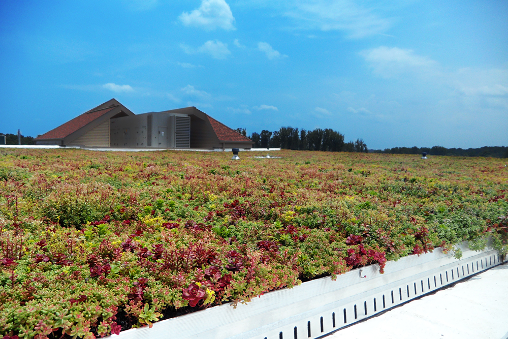 Montgomery County Schools Green Roof by LiveRoof