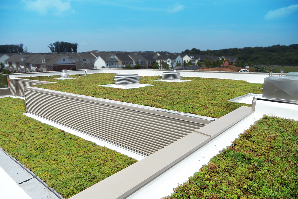 Montgomery County Schools Vegetated Roof by LiveRoof