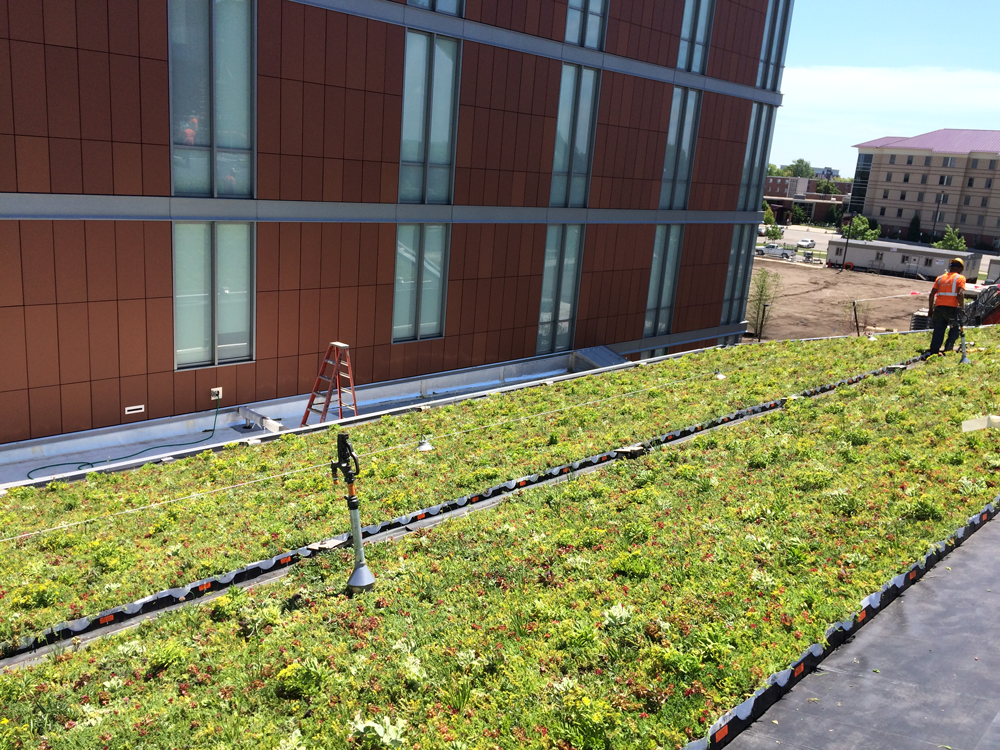 LiveRoof-Green-Roof-at-Western-Michigan-University