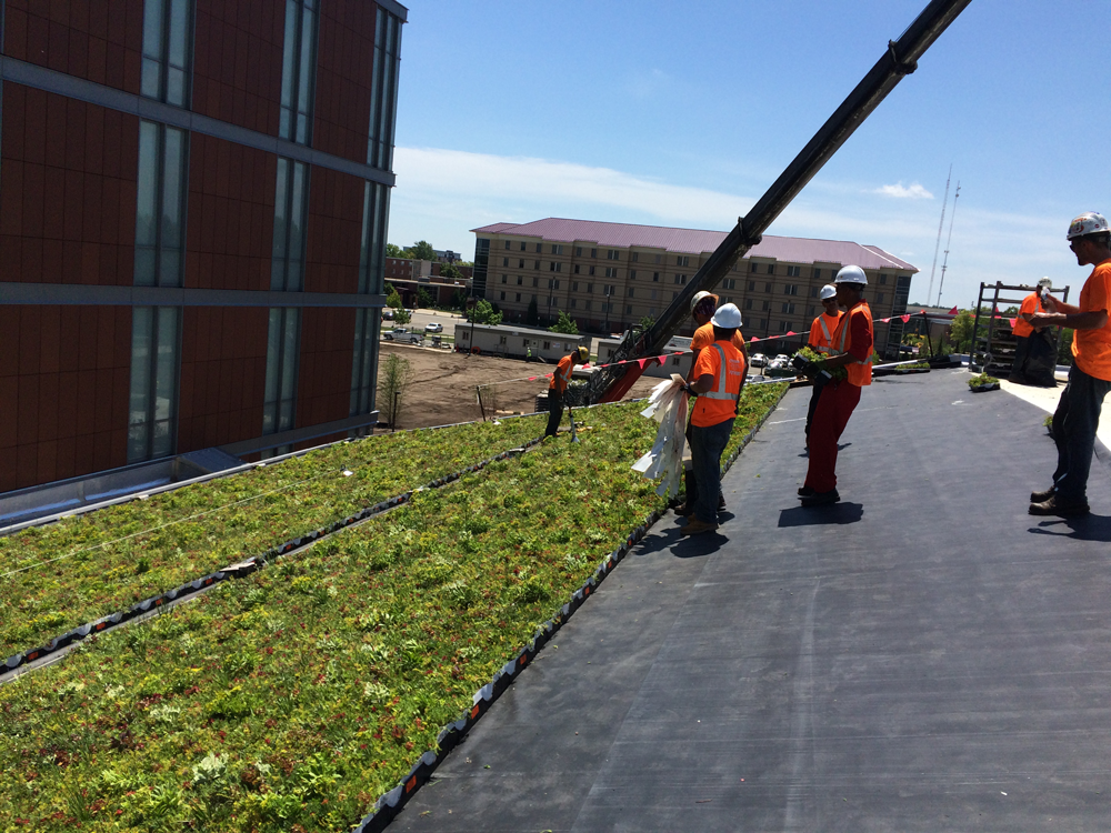 LiveRoof-Living-Roof-at-Western-Michigan-University
