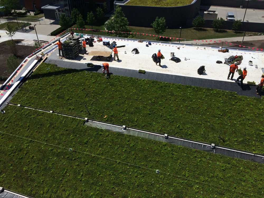 LiveRoof-Vegetated-Roof-at-Western-Michigan-University